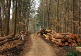 В Малоярославецком районе расследуется незаконная вырубка леса