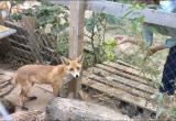 В Калуге потерялся лис