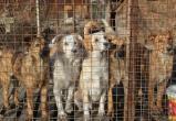 Крупнейший калужский приют для собак выживают с территории
