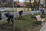 Около ИКЦ в Калуге посадили липы