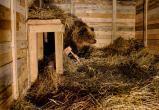 Медведица Маша с Камчатки приехала в Калугу