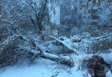 Дерево рухнуло на машину в Калуге