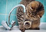 Азарово останется без воды 14 февраля
