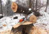 Два товарища незаконно вырубили лес на 100 тысяч рублей