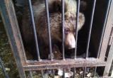 Как живётся в Калуге камчатскому медвежонку Маше?