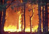 Пожароопасный сезон официально объявлен