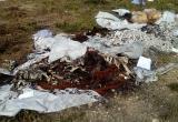 В Калужской области обнаружили свалку с трупами животных