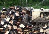 80 тонн подозрительных яблок и груш уничтожено в Калужской области