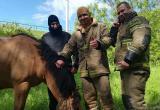 Путешествуя из Монголии в Польшу, итальянка потеряла коня в Калужской области