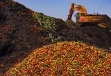 """Что стоит делать с """"санкционными"""" продуктами, пригодными к употреблению?"""