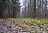 В лесу в районе Грабцевского шоссе обнаружен труп женщины