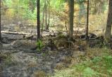 Лесной пожар тушили 15 часов