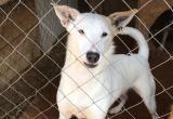 Приют для бездомных собак обратился к губернатору и Городскому Голове