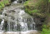 Калужанам предлагают выбрать самый популярный памятник природы