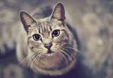 Неизвестный расстреливает кошек в Калуге