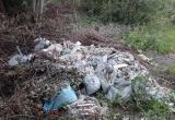 Перекладывание мусора вместо уборки возмутило калужан