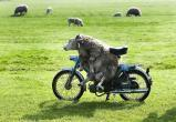 Пьяный мотоциклист гонял без прав по Правому берегу