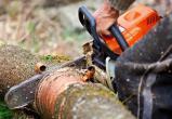 Калужанин срубил лес на 360 000 рублей
