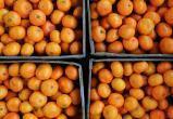 В Калуге обнаружили зараженные мандарины