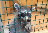 """Новый закон о животных: кричать """"ура"""" ещё рано"""