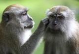 В Калуге украли обезьян из центра реабилитации