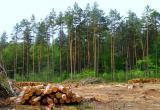 Калужский предприниматель вырубил лес на 500 000 рублей
