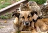 За выброшенных на улицу животных горе-хозяев хотят штрафовать