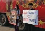 В Калуге прошел пикет против передвижного цирка с дикими животными